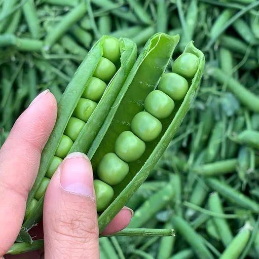 昆明 云南昆明甜豌豆5斤