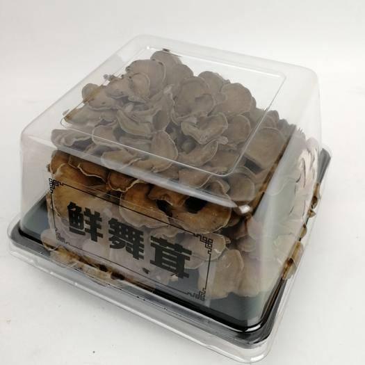 丽水庆元县 鲜货舞茸一盒 生鲜舞茸栗蘑新鲜灰树花150g/盒
