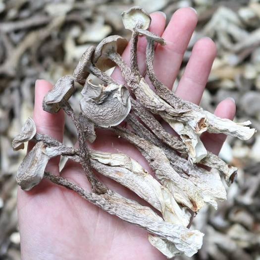 广州越秀区鹿茸菇 直销特级鹿茸菌1斤装 干度足干香味浓郁 精选货