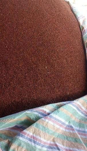 喀什疏附縣 一年四季大量批發價供應 高山圣果 沙棘干果