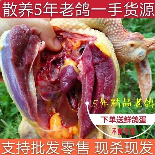 衢州常山縣 順豐包郵 散養5年老鴿子 乳鴿 現殺速凍發貨 一件代發