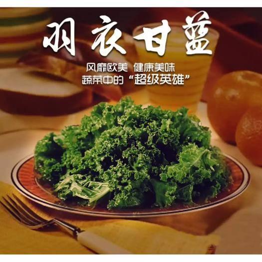 北京 羽衣甘藍