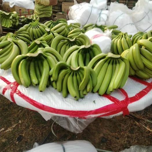 红河元阳县 (正常发货)越南香蕉