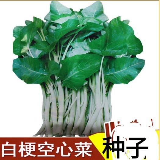 唐山迁安市 白骨空心菜种子高产蔬菜种子四季播种大叶原厂彩色包装34克包
