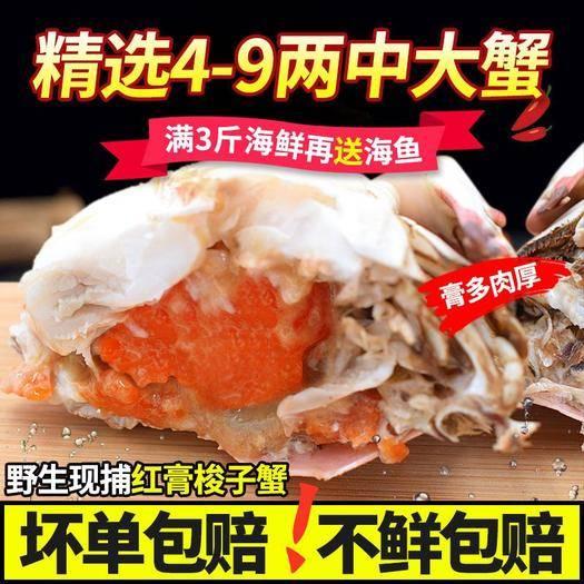 南京红膏蟹 【可选顺丰配送】【红膏全母】螃蟹鲜*梭子蟹新鲜海鲜鲜*梭
