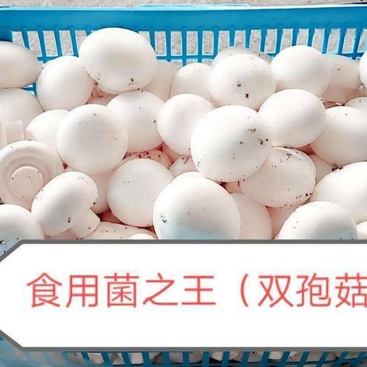 邢台南和县 食用菌双孢菇