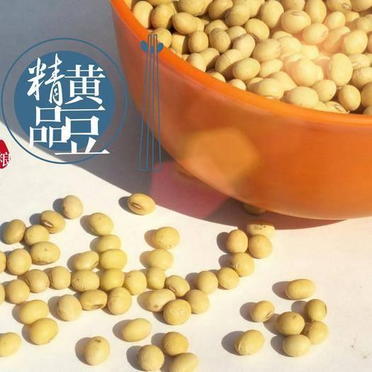 鄢陵县黄大豆 精品黄豆  高蛋白