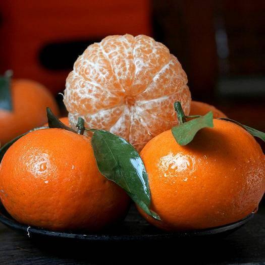 南寧武鳴區 【壞果包賠】正宗廣西武鳴沃柑橘子水果新鮮桔子砂糖橘