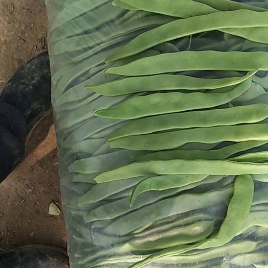 濟南商河縣綠扁豆 條直,無鼓豆,長度20以上