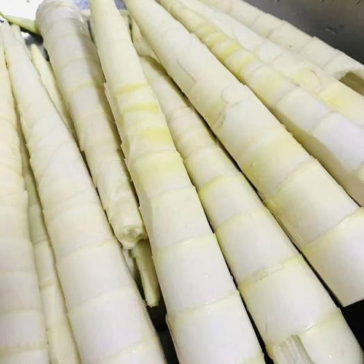 杭州臨安區 新鮮春筍 【特價包郵】 新鮮春筍5斤裝活動一件代發