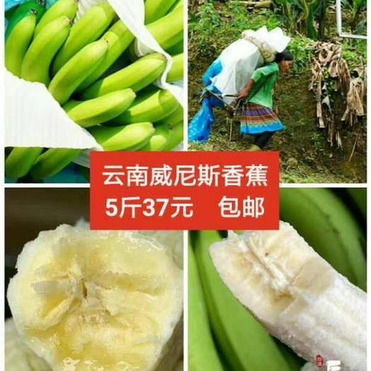 屏边苗族自治县 威尼斯香蕉~自然熟香蕉,软糯,香甜可口