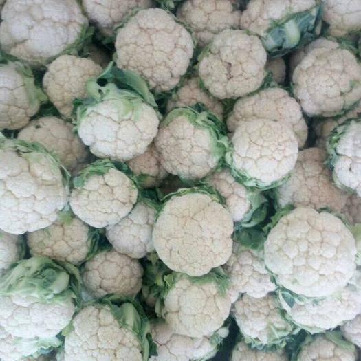 城固县白花菜 夲地240天莱花大量上市,个头均匀,颜色白,上货量大