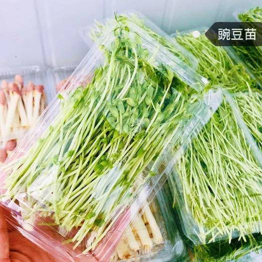 永登县 有机芽苗菜豌豆苗
