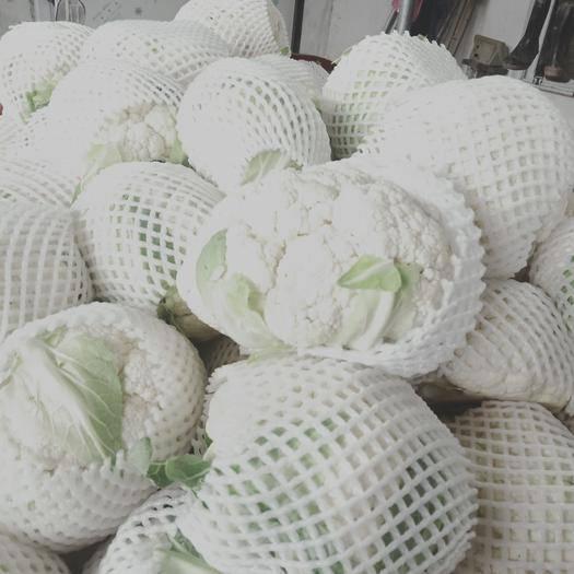 枝江市 白花菜己大量上市质量非常好、量也大,欢迎老板选购