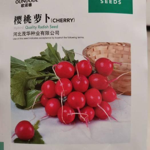 商丘夏邑县 樱桃萝卜种子,肉质白色脆嫩,速生,抗裂球,耐糠心