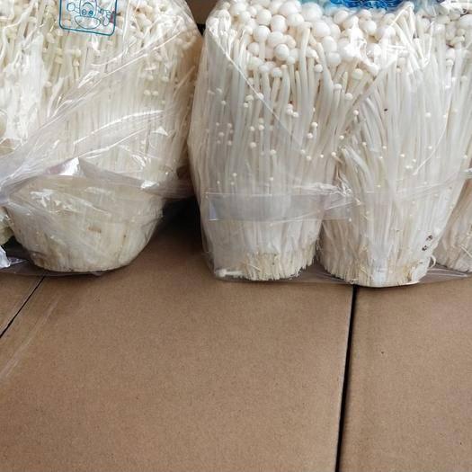 商丘梁園區白金針菇 特價金針,白玉,蟹味