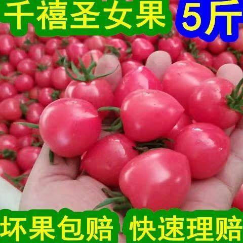 聊城莘县 新鲜千禧圣女果头茬小番茄产地精品直发