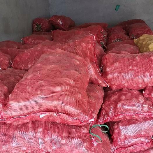 潍坊青州市山药种 山药苗现货三十万颗