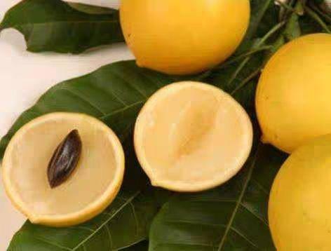 钦州灵山县黄晶果苗 黄晶果,台湾新品种