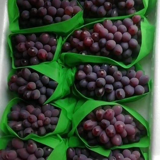 北镇市 大量出售优质茉莉香葡萄