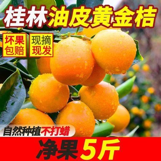 桂林阳朔县 广西桂林脆皮金桔滑皮金橘新鲜应季水果5/10斤纯甜无酸青黄