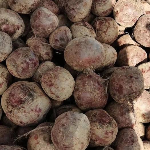 徐州铜山区 徐州甜菜大量有货