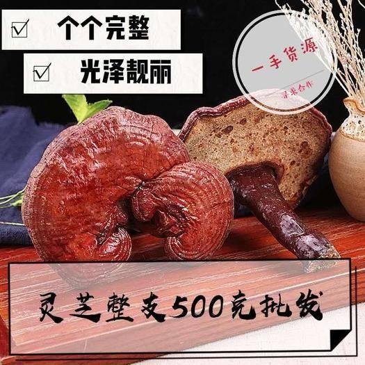 亳州谯城区 灵芝 木灵芝 产地直销量大从优 包邮