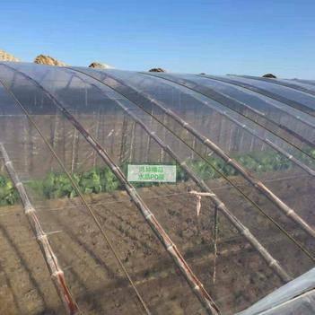 棚膜  【厂家直销】水晶PO膜  西瓜葡萄草莓专用膜