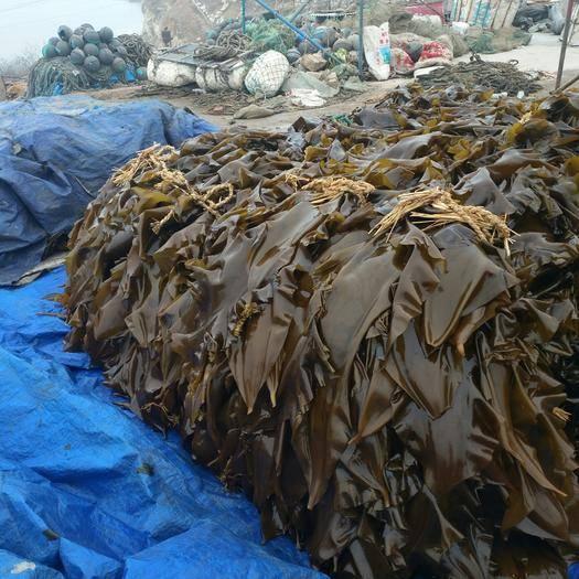 大连 鲜品海带,无污染,货源充足,诚信交易!