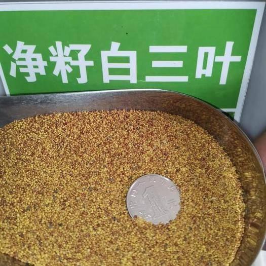 成都锦江区 三叶草种子红三叶种子白三叶种子包邮