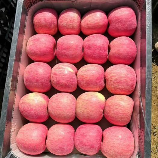 洛川縣洛川蘋果 陜西洛川紅富士十斤裝脆甜80大果紅富士包郵一件代發大宗批發