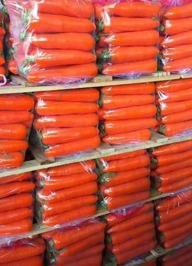 厦门翔安区三红胡萝卜 福建316 精品中条 大条 小条 超市  供货 专业代发