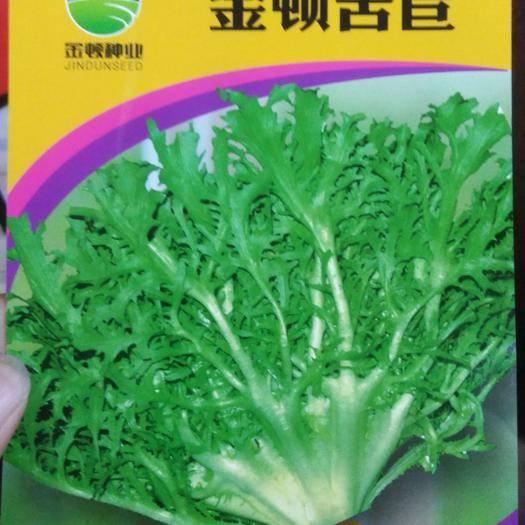 西安 高产苦苣种子