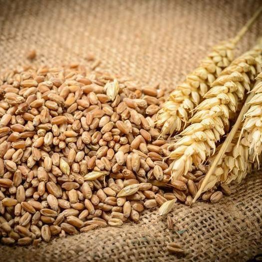 蚌埠淮上區 富硒小麥,富硒面粉