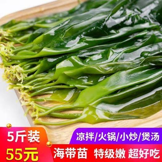 霞浦县海带芽 (现货供应)海带嫩苗霞浦特产小海带苗非干货三秒火锅食材