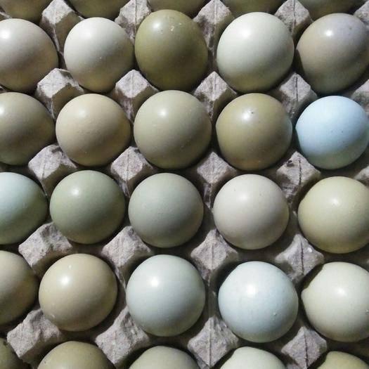 济南济阳区 七彩山鸡蛋卵磷脂含量高,富含多种维生素。誉为蛋中之王。