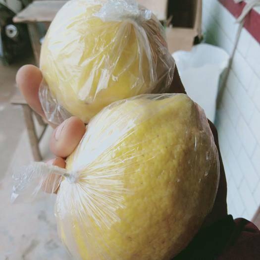 安岳縣 安岳黃檸檬大果,單個重250克——300克,薄皮多少