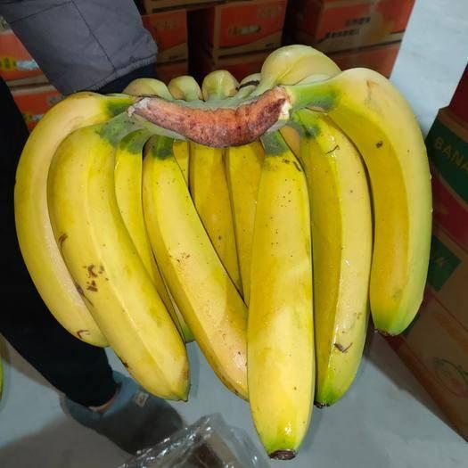 邯郸 供应云南香蕉18斤装3盘蕉,果面干净口感甜皮毛漂亮