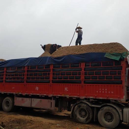 来宾兴宾区木粉 大量食用菌杂木木屑供应