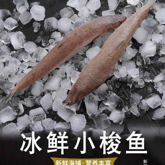 潮州湘桥区 【顺丰包邮】海捕小梭鱼小鱼海鲜水产鲜活沙丁鱼小杂鱼海鱼豆腐鱼