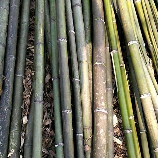 郴州嘉禾县莱架竹 麻竹,全部现货,日供一万根。