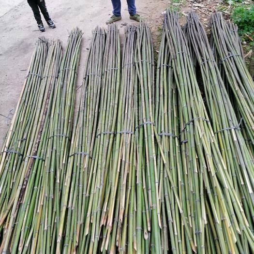 耒阳市 麻竹3米的30根,2.5米的50根!