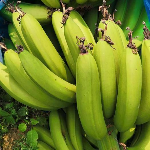 广州增城区广东香蕉1号 七成熟