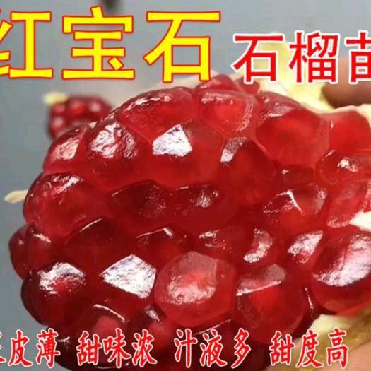 临沂平邑县 红宝石石榴苗  颗粒大 水分足 口感极好 适合南北方种植