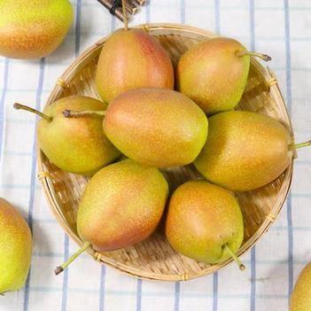 香梨子整箱10斤红香酥梨子批发当季新鲜水果雪梨子包邮小香梨