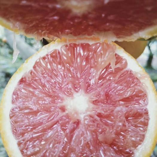 重庆江津 卡拉卡拉红肉脐橙苗 品种保证 根部保湿 24小时发货