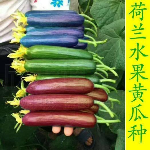 南昌 进口水果黄瓜种子