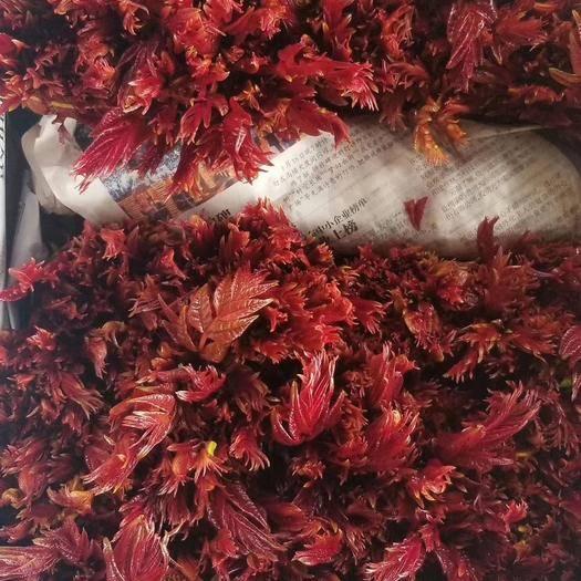 濰坊臨朐縣紅香椿芽 紅香椿