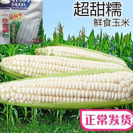 鄭州二七區 甜糯玉米種子 珍甜糯66 春秋兼用 大棒 好吃200克