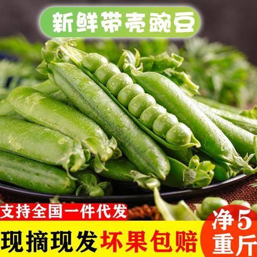大理大理市 云南新鮮豌豆五斤包郵支持一件代發
